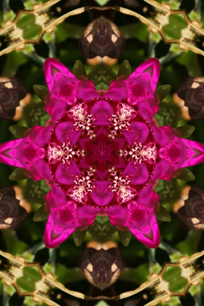 flowers_01