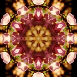 Inside a flower
